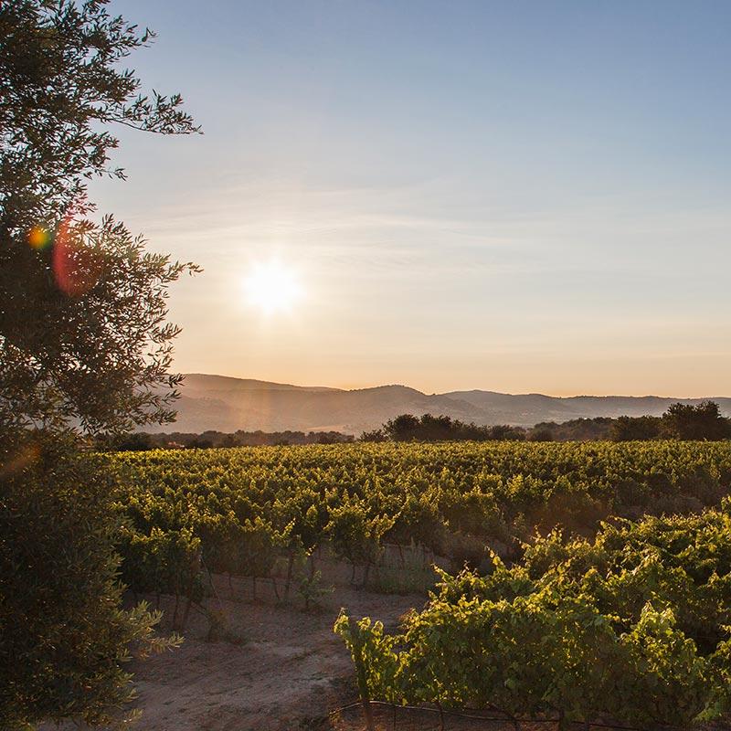 Winetour la Giasira